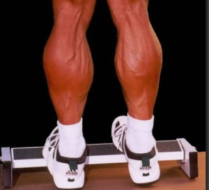 Calves training
